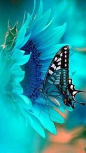 Blue flower with blue butterfly