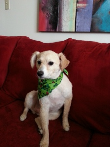 Mollie after her spa day sitting on the couch with her new scarf around her neck