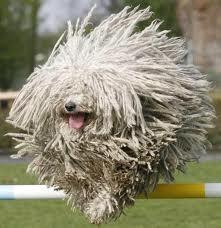 Running Mop Dog Found on smashingmagazine.blogspot.com