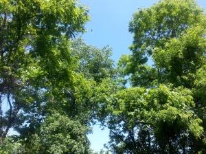 Trees & sky from my balcony