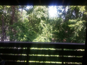 Picture of trees & sunstream from my balcony