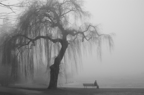 Foggy, misty day with weeping willow tree and solitary bench with a person sitting on it representative of depression found on Google