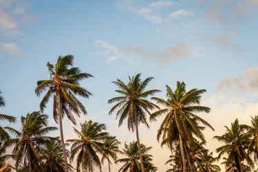 Photo of a group of palm trees against a blue sky background by Thomas Lefebvre